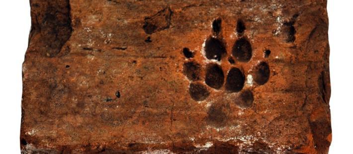 gdańsk, muzeum archeologiczne, dzień psa, www.polnocna.tv, www.strefahistorii.pl